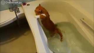 Кот упал в ванную. Смешные животные(, 2015-08-22T12:41:31.000Z)