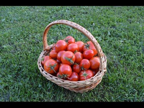 Итоги кастинга на лучший сорт томатов 2015 года