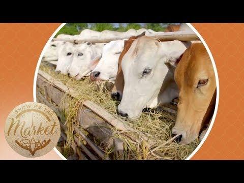 DV Boer Farm - Nasugbu | Show Me The Market