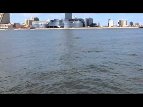 Dolphin watching boat tour with Atlantic City Cruises, NJ 9/23/14 Part 1