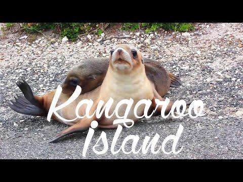 #4 Kangaroo Island - Land of Wildlife ! AUSTRALIA
