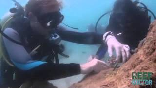 ReefDoctor: What we do. - Marine Conservation in Madagascar.