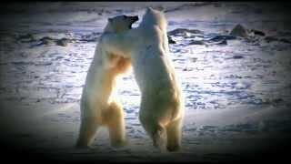 BBC Дикая природа России - Камчатка