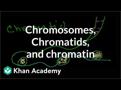 Chromosomes, Chromatids, Chromatin, etc.