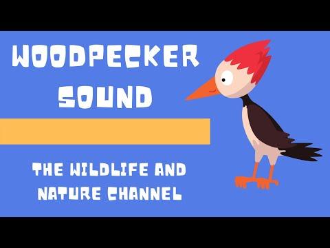 Woodpecker Sound