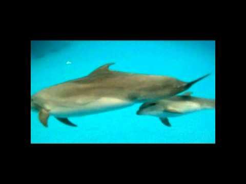 Дельфинёнок.mp4