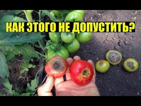 Вопрос: Чем обработать помидоры, чтобы они потом не гнили?
