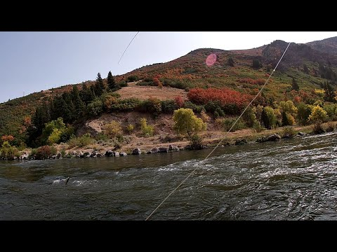 Fly Fishing On The Lower Provo River - Trout Stacked Up In A Soft Edge!