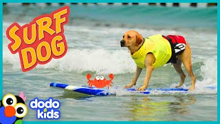 Puppy Grows Up To Be A SURFING DOG | Adventure Animals | Dodo Kids