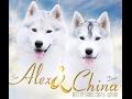 Хаски Онлайн  Siberian huskies online Chamonix Deus siberians online