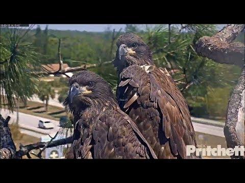 SWFL Eagles ~ E10 & E11 Season 6 Tribute 5.6.18