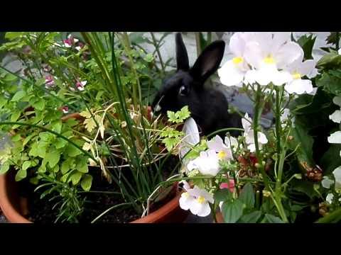 Charon the Rabbit in the garden