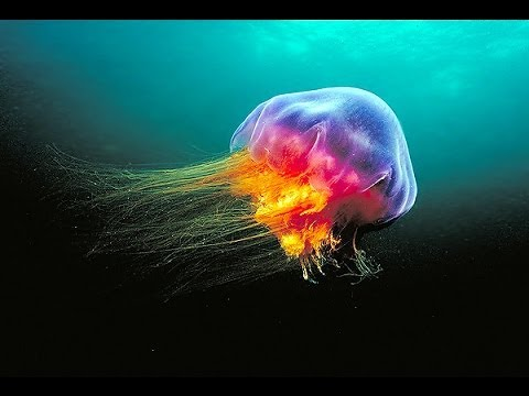 worlds most amazing photos part 18 deep sea creatures