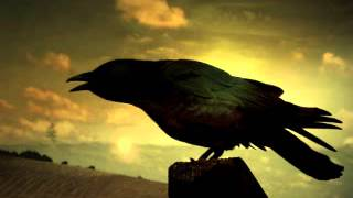 Free sound effect crow HQ Free download