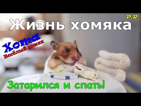 Gonzo Hamster