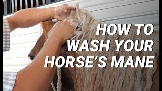 How To Wash Your Horse