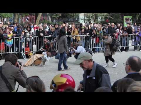 2010 Halloween Dog Parade