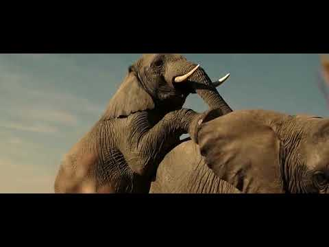 The Brothers Grimsby- Elephant Scene  (EXTREMELY Graphics)