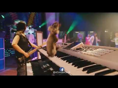 BUIU DAS MUSICA AQUECIMENTO PANTERAS BAIXAR MC