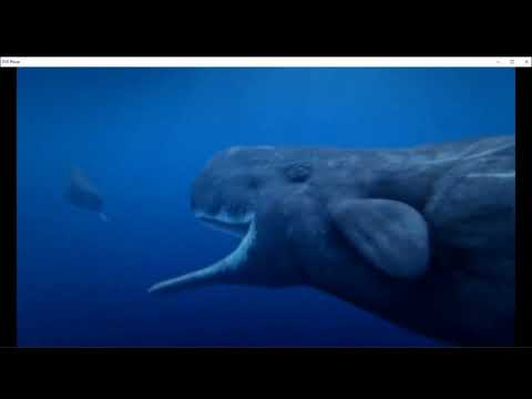 Ocean Odyssey: Secrets of the Deep - Male Sperm Whales Battle For Females
