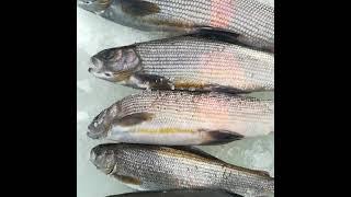 Зимняя рыбалка на хариуса,  таежная речка.