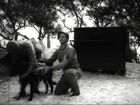 The Use of War Dogs, 1943