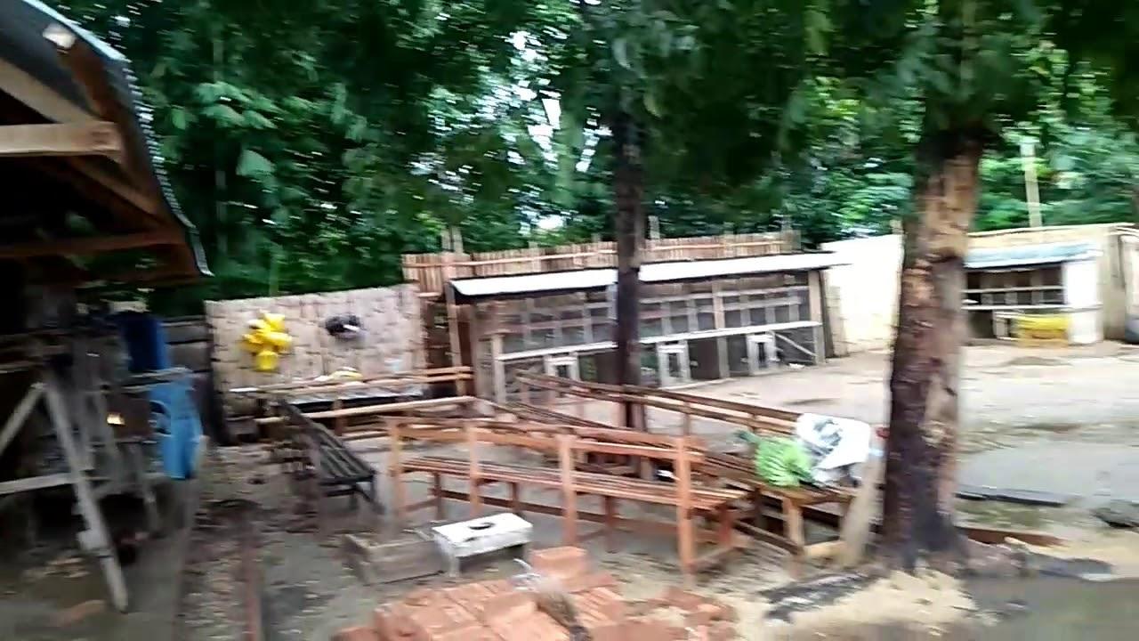 Pembuatan ruangan kandang ayam kampung kapasitas 500 ekor ...