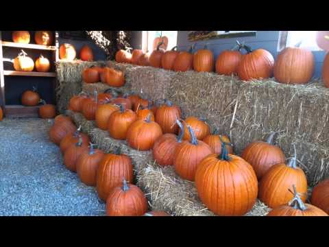 Gordon Skagit Farm 2015 - Apples, Pumpkins, Corn Maze (HD)