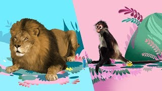 StoryBots | Animal Songs 🦁🐵🐪| Music To Learn For Kids