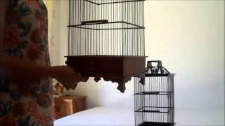 Jual Sangkar Burung Pleci Berbagai Ukuran dan Harga