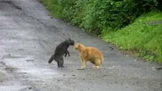 """""""Ultimate Fighting Cats"""""""