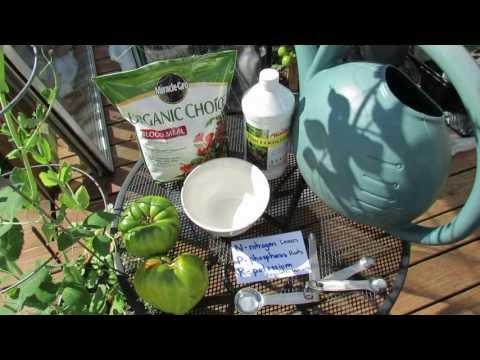 Using Organic Fish Emulsion Or Fertilizer On Garden Vegetables: The Basics - The Rusted Garden 2013