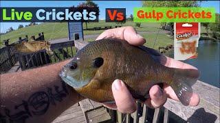 Gulp Crickets vs Live Crickets | Bait Testing #2