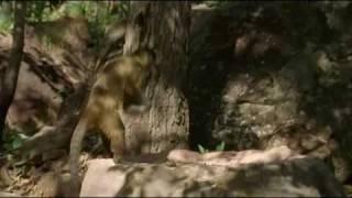 Monkeys Usin