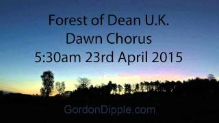 Dawn Chorus Forest of Dean U.K.