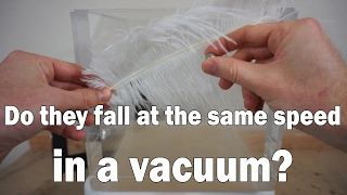 if you drop a feather and a metal cube in a vacuum chamber will they hit at the same time?