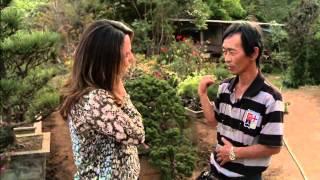 Aprenda a cultivar um Bonsai!