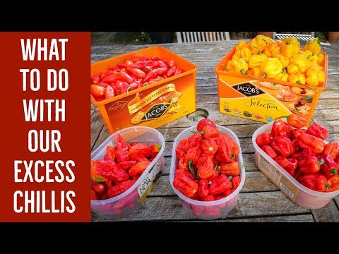 What to do with our excess chillis – The Mad Dog Chilli Farm