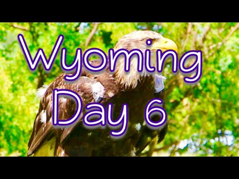 Wyoming: Day 6 (Raptor Bird Event)