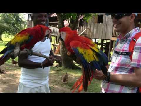 McCaws in the wildlife preserve, Mabita, Gracias a Dios, Honduras.