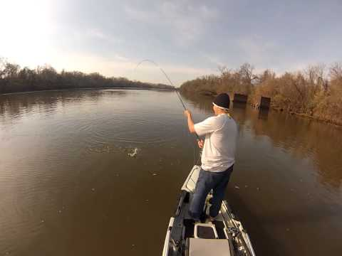 Fly Fishing For Shad On The James River, Richmond VA. 2013 Shad Run