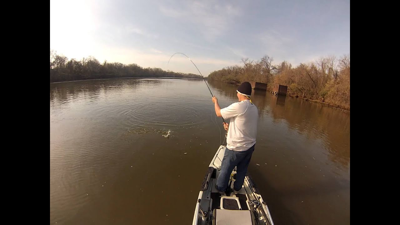 Fly fishing for shad on the james river richmond va 2013 for Fishing in richmond va