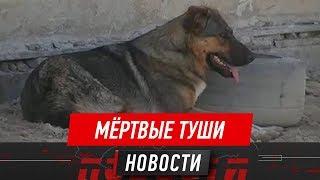 В актауском приюте для бездомных животных неизвестные расстреляли собак