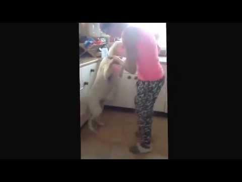 Bum sniffer aka Labrador!