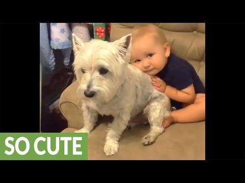 Dog crashes baby's photo shoot