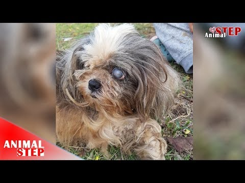 Abandoned Dog with Severely Eye Problem Waiting for New Home