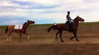 Обучение коня под верховую езду