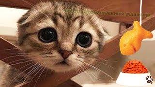 ПРИКЛЮЧЕНИЕ МАЛЕНЬКОГО КОТЕНКА мультик для детей и малышей мультфильм про котят  мультики на #ММ