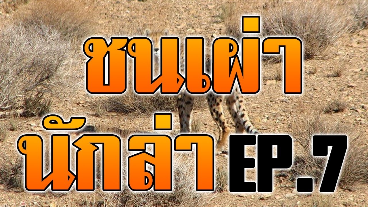 #สารคดี ชนเผ่านักล่า : เอาชีวิตรอดแบบคนป่า ล่าสัตว์ หากินแบบคนป่า EP.7
