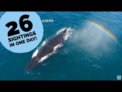 Humpback Whales year round in Dana Point